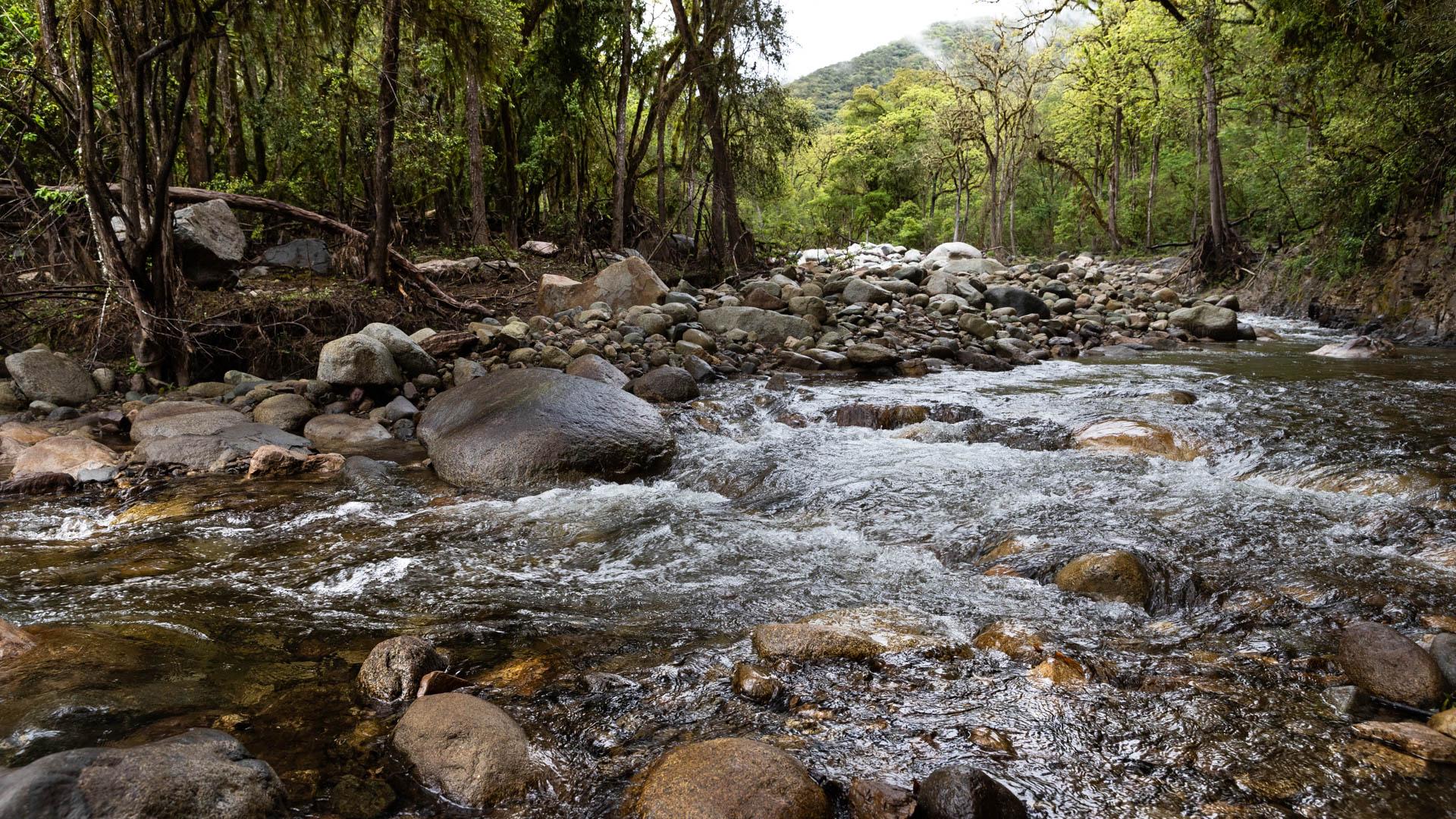 La exuberancia de las yungas en Los Toldos, pueblo al que se accede solamente por Bolivia.